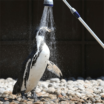 Even Penguins Need Refreshing!