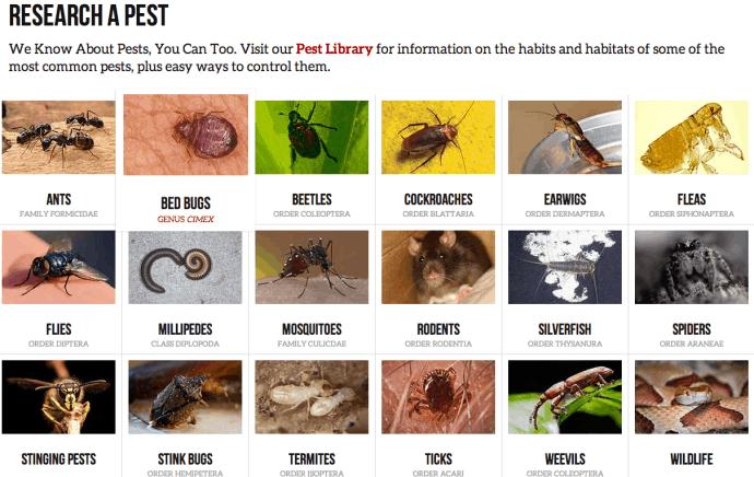 Orkin's pest section on desktop