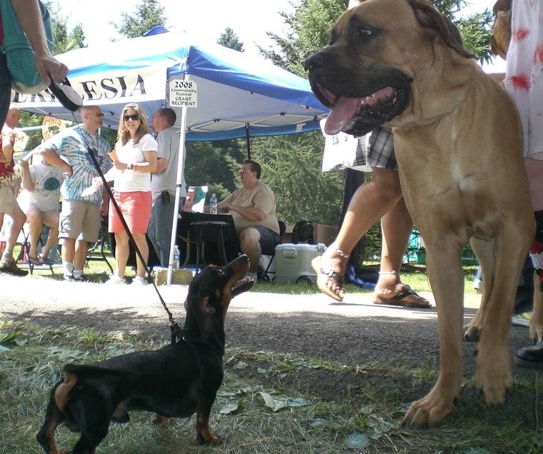 01-small-dog-big-dog