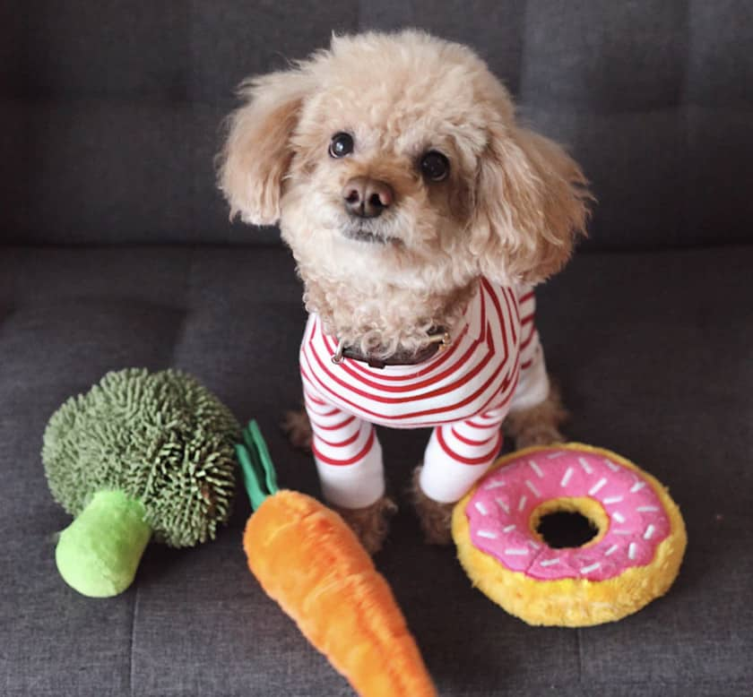 A photo of a dog with 3 toys
